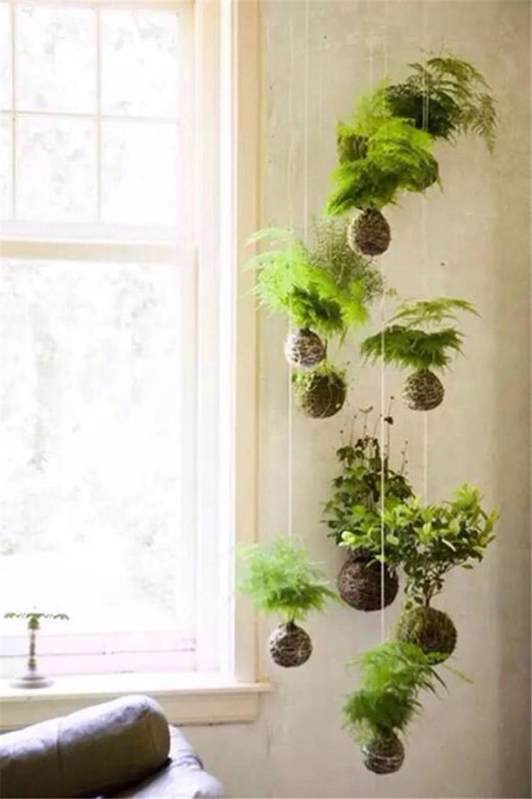32 Impressive And Simple Indoor Hanging Plants Ideas For Your Home ...