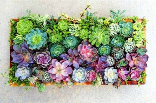 How To Make Your Succulent Backyard Garden Look Stylish? Succulent Garden; Succulent Backyard; Home Decor; Garden Decor; Garden; Backyard Decor; Succulent Decor; #succulent #succulentgarden #backyarddecor #homedecor #garden