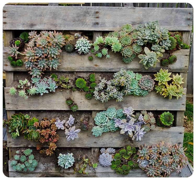 How To Make Your Succulent Backyard Garden Look Stylish? Succulent Garden; Succulent Backyard; Home Decor; Garden Decor; Garden; Backyard Decor; Succulent Decor; #succulent #succulentgarden #backyarddecor #homedecor #garden