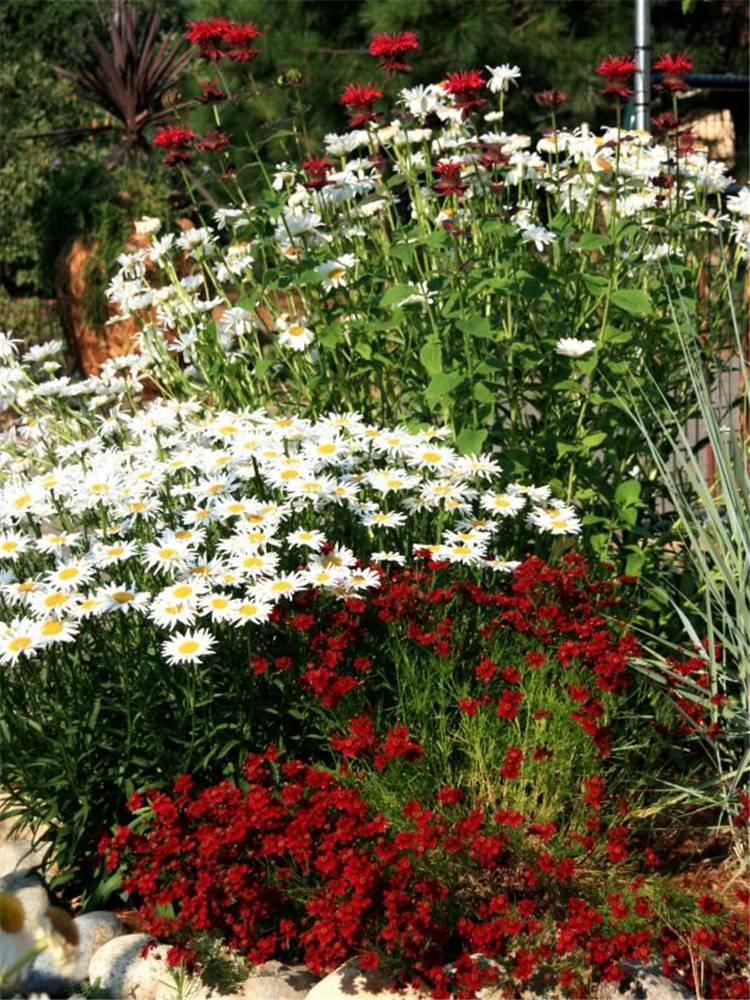Gorgeous Garden Design Ideas You Would Love To Have; Home Decor; Garden Decor; Yard Decor; Front Yard Decor; Garden Landscaping Ideas; Front Yard Landscaping; Front Yard; Landscaping Ideas #gardendecor #gardenlandscaping #landscaping #yard #garden #yarddecor