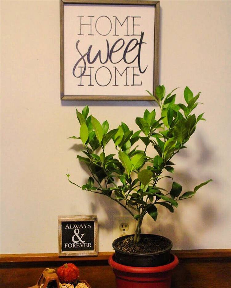 Indoor Plants Decoration Ideas To Make Your House Stunning; hanging plants; Indoor Plants decor; hanging plants decor; home decor; plants decor; wall hanging plants; plants decor;#homedecor#plantsdecor#hangingplants#indoorplants#indoorplantsdecor#hangingplantsdecor