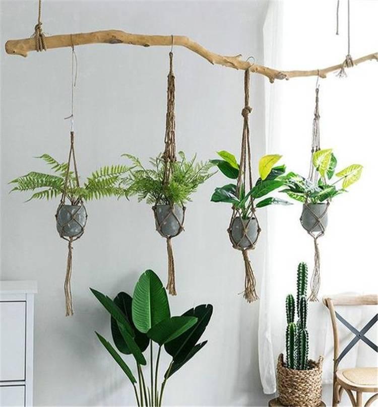 Simple Indoor Hanging Plants Ideas
