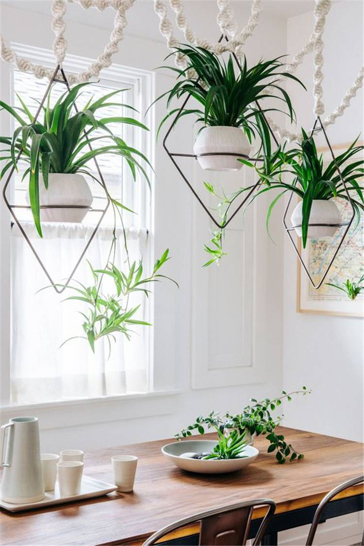 Hanging Plants Ideas For Your Sweet