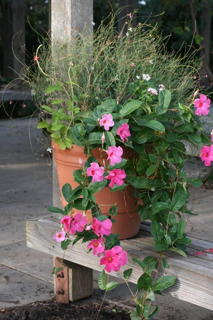 Creative Garden Design Ideas To Make The Gardens No Longer Monotonous; Garden; Garden Design; Budget Garden Design; Future Garden; Backyard Renovation; Garden Renovation; DIY Garden; #garden #gardendesign #budgetgardendesign #budgetgarden #futuregarden #backyardrenovation #gardenrenovation #diy #diygarden