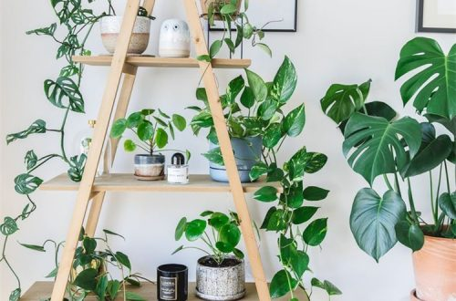 Exclusive Plant Stand Ideas To Make Your Home Glam; Home Decor; Home Design; Plant Stand; Plant Stand Ideas; Plant Ideas; Plant Home Decor #homedecor #plantstand #plantstandideas #homedesign #planthomedecor #plantideas #plantstanddesign
